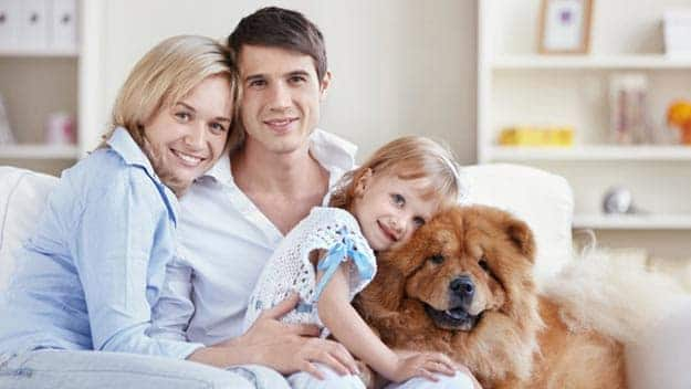 Wills & Trusts dog-young-family Direct Wills Harefield Grove